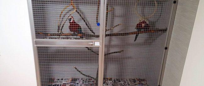 Vtáky domáci maznáčikovia