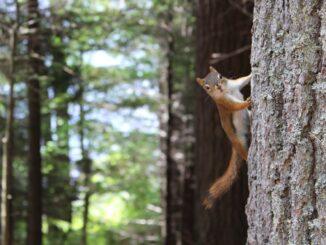 Veverička záber